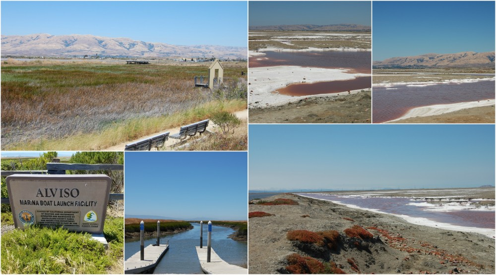 Alviso Marina Collage
