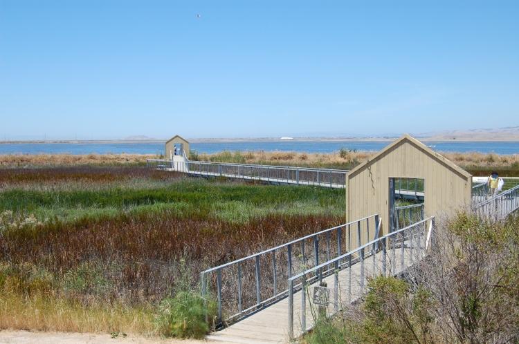 California Alviso View of Marsh