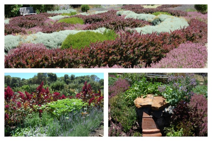 Filoli Knot and Kitchen Garden Collage