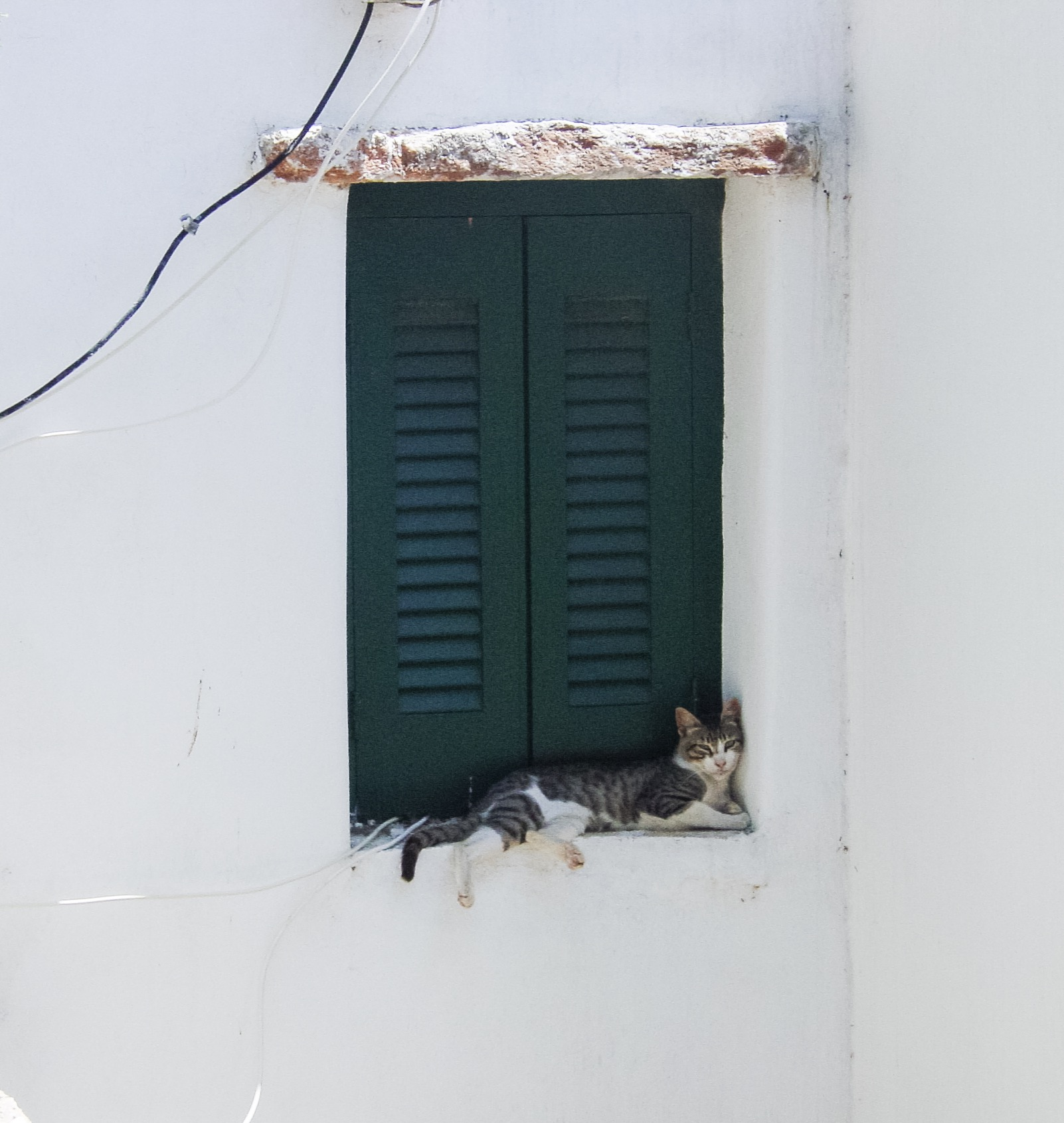 cat-in-window-in-paros