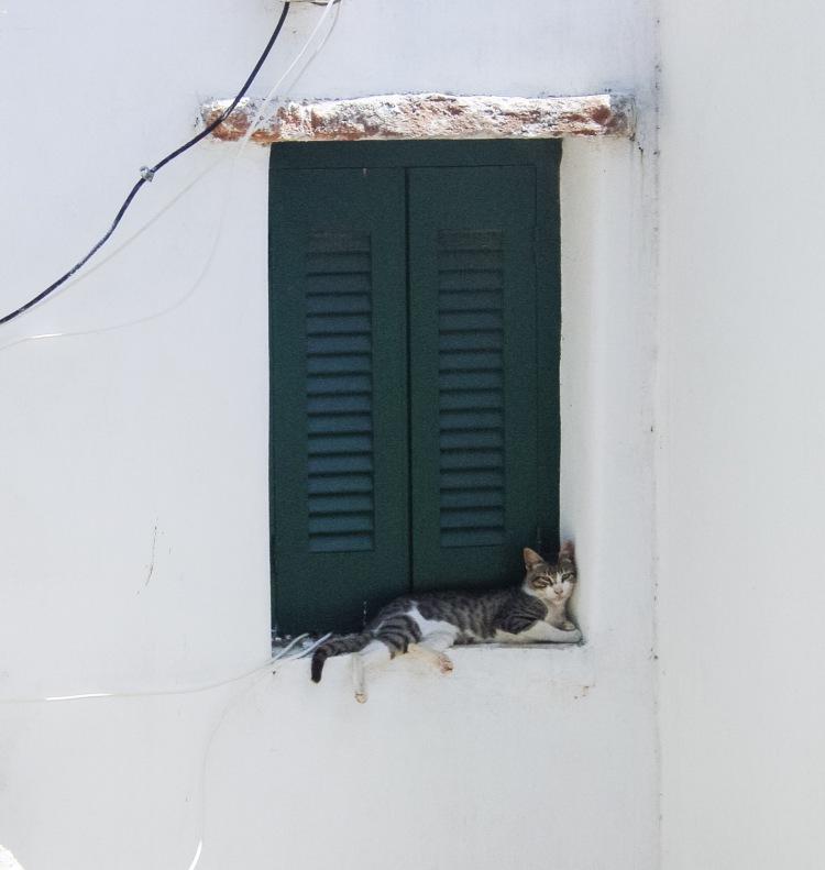 cat-in-window-in-paros