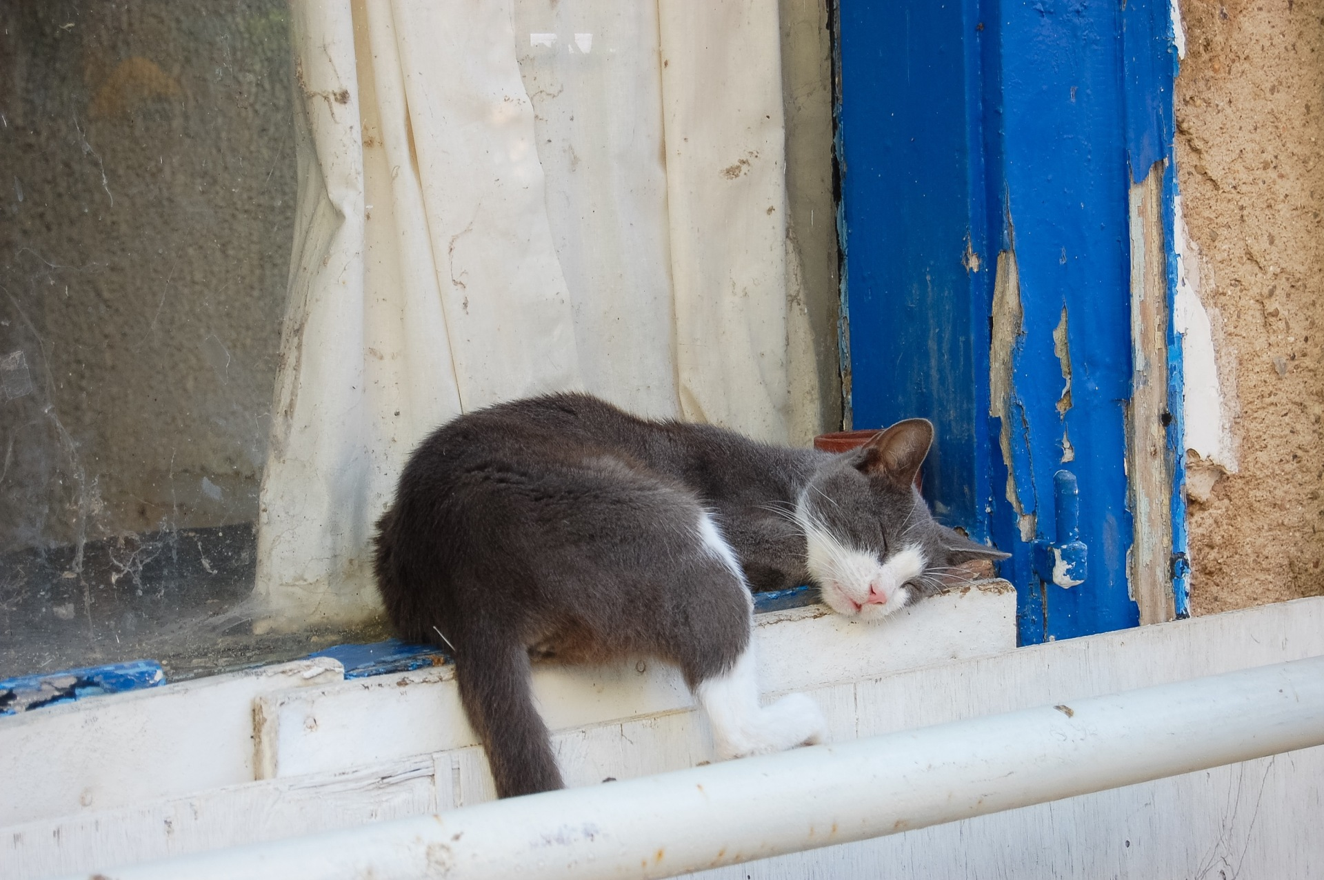 cat-napping-in-nafplio