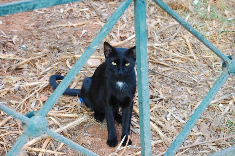 cat-people-watching-in-plaka