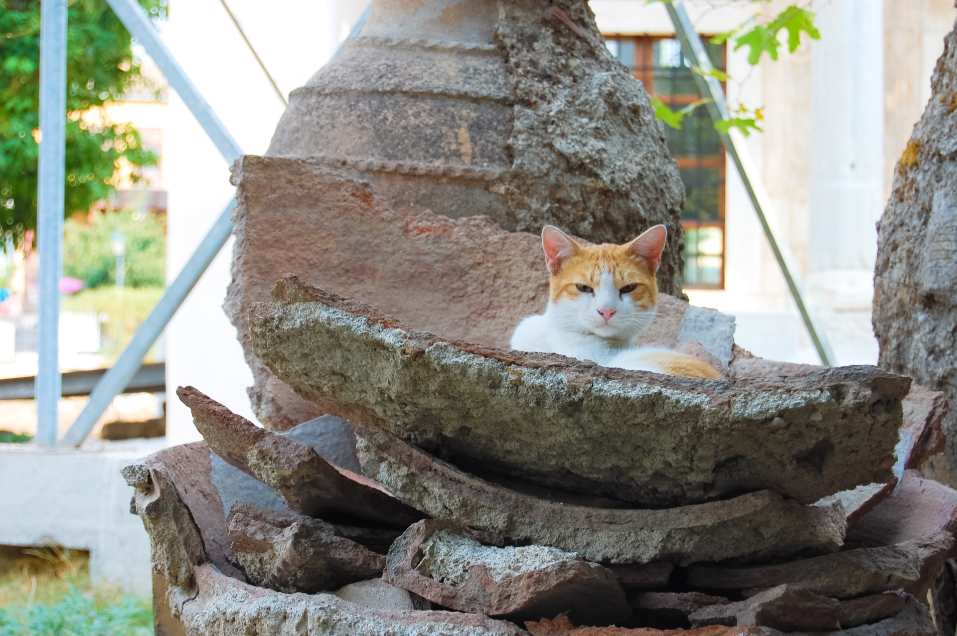 cat-relaxing-in-pottery-artifacts-plaka