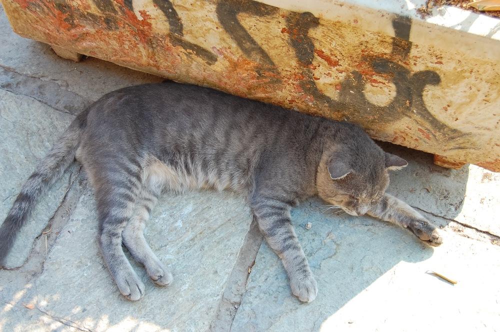 cat-taking-a-siesta-in-plaka