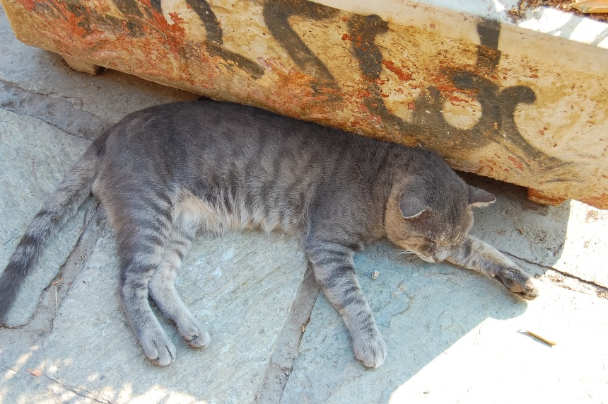 cat-taking-a-siesta-in-plaka