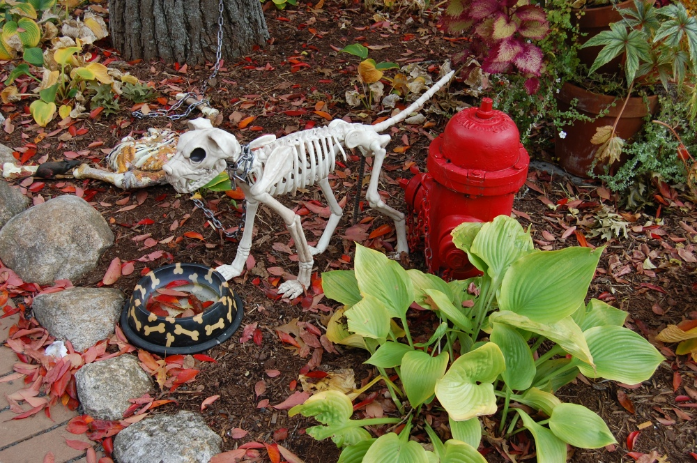 pond-house-cafe-skeleton-dog-1