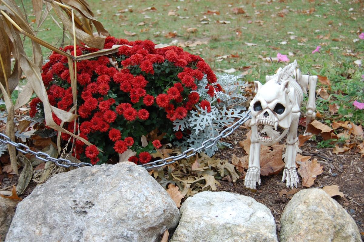 pond-house-cafe-skeleton-dog-2