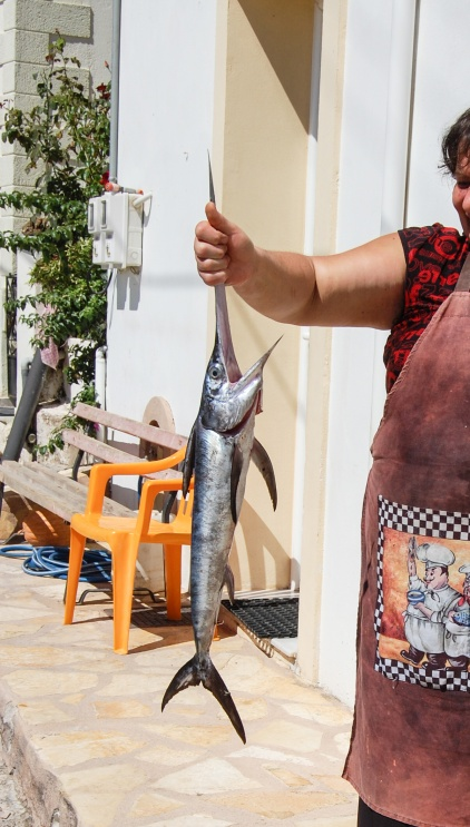 fresh-catch-in-neapolis_final