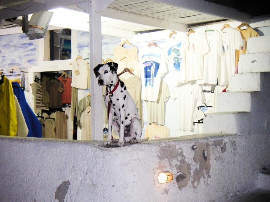 Dog in Santorini