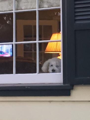 Buddy in the window