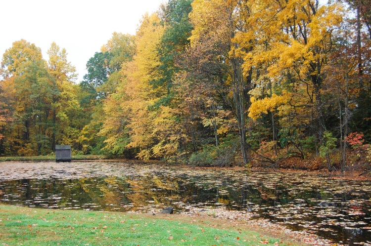 Countryside Park Pond 1