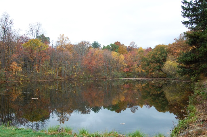 Countryside Park Pond 2