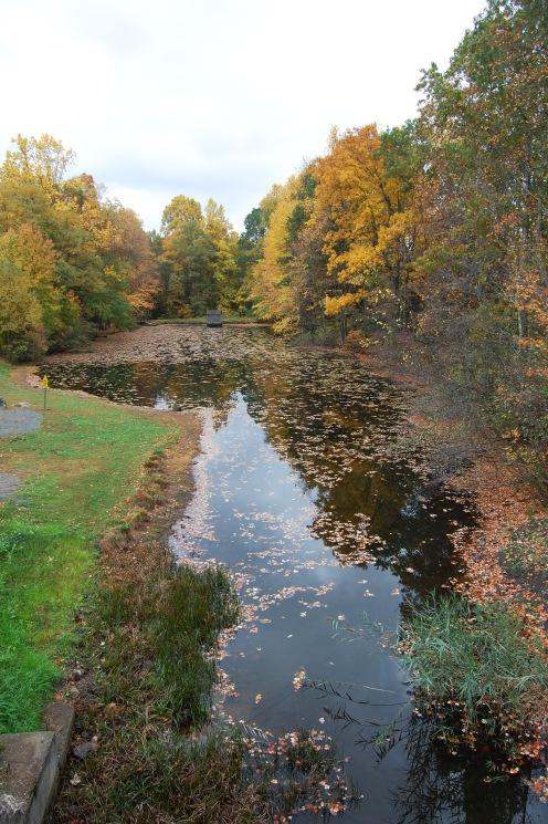 Countryside Park Pond 3
