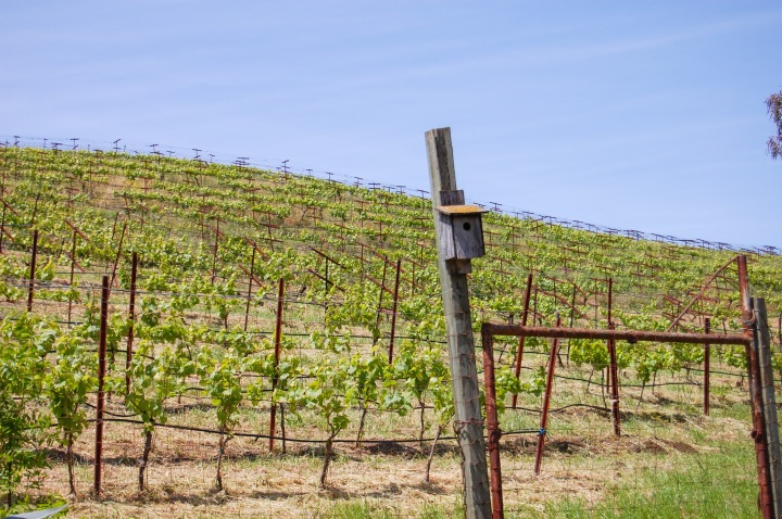 Cooper-Garrod Vineyard_edited