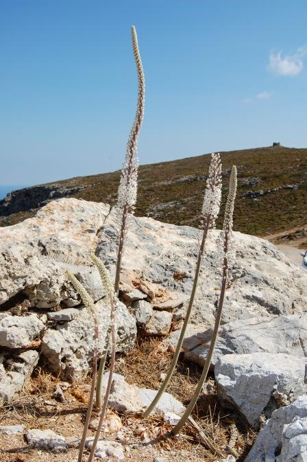 Mountainside on Kythira