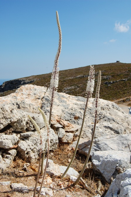Mountainside on Kythira