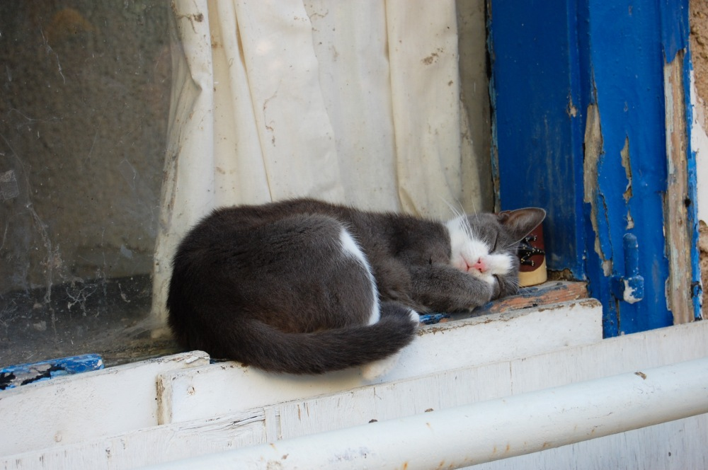 Catnapping in Greece