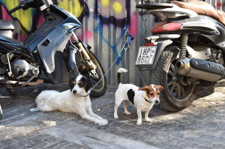 Dogs in Plaka