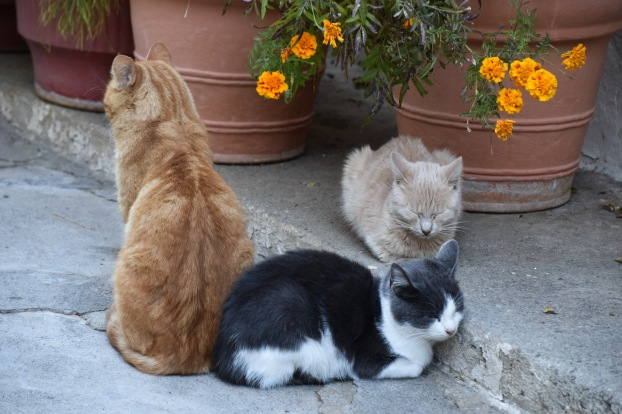 Cats of Pantanassa 2