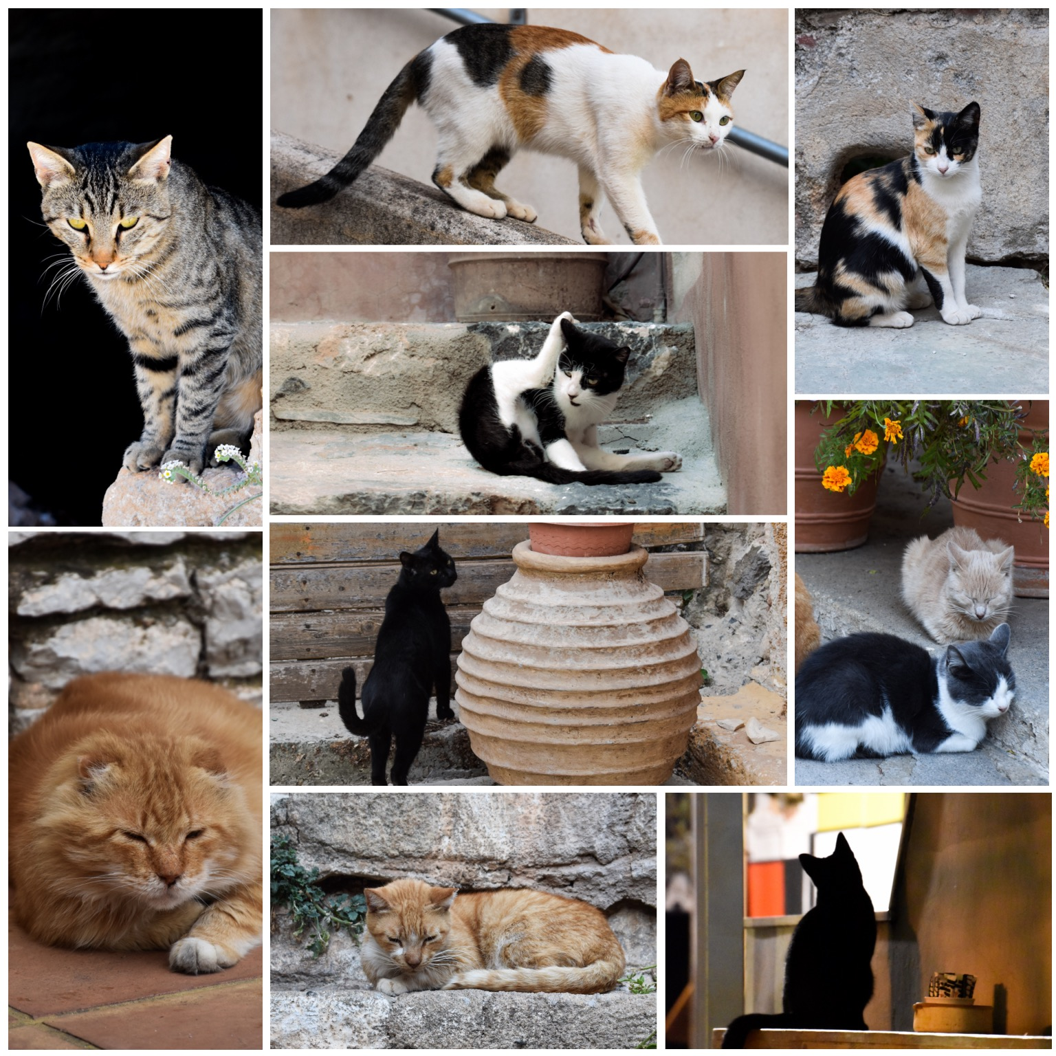 Cats of Greece Collage 2017