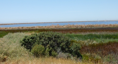 Alviso Salt Marsh