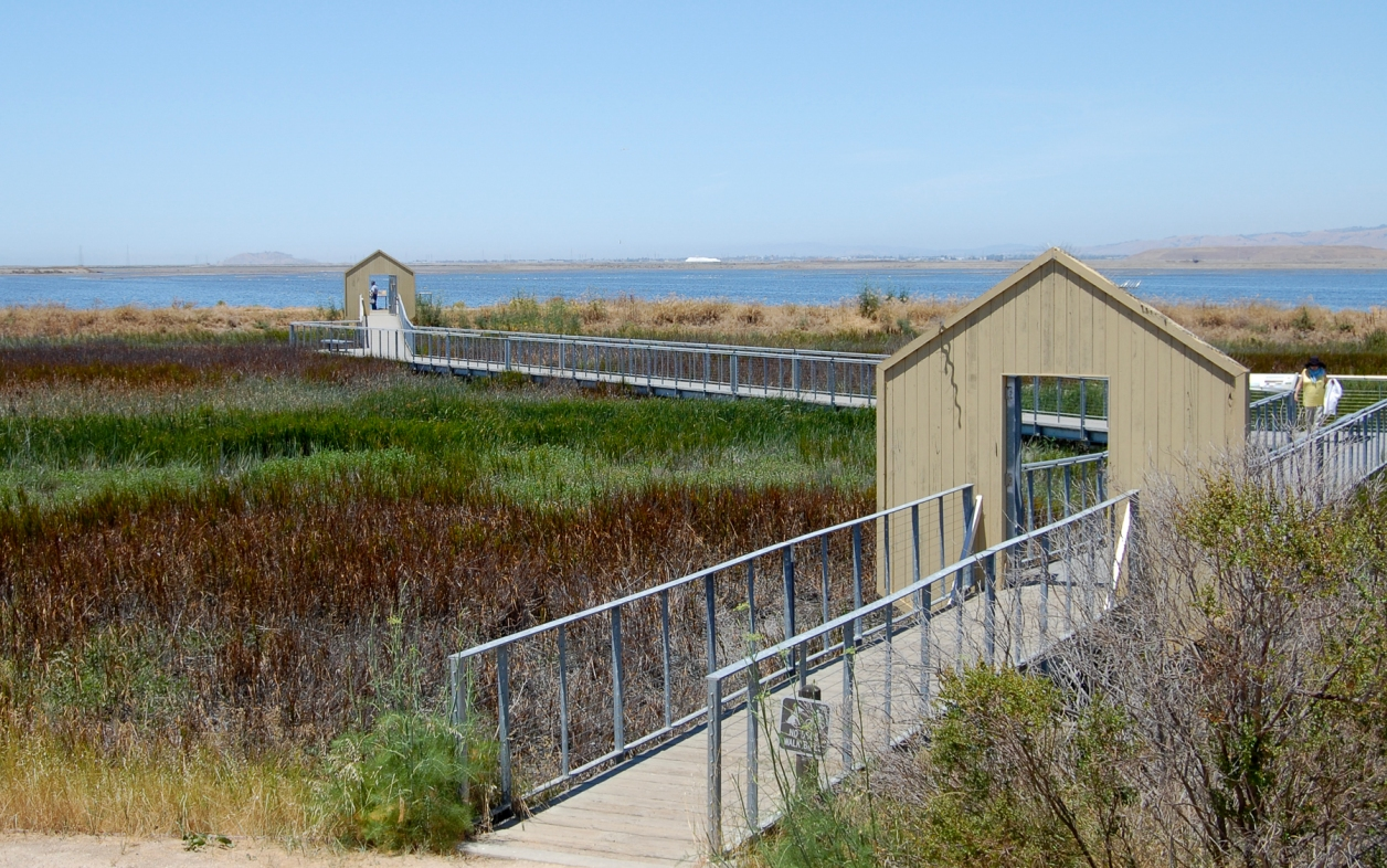 Alviso Salt Marsh
