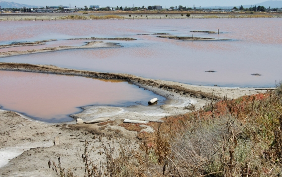 Alviso Salt Ponds
