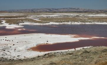 Alviso Salt Ponds