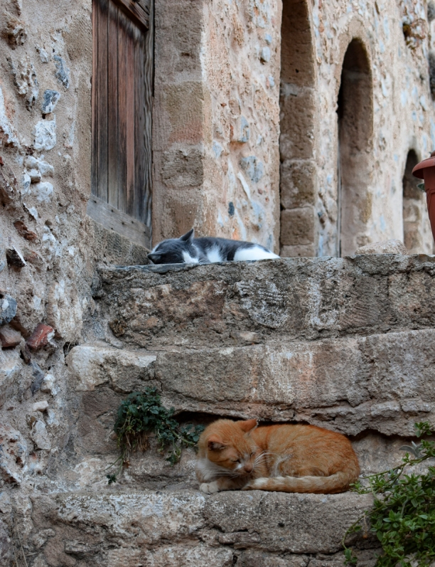 Monemvasia Cat 4 LR (1 of 1)