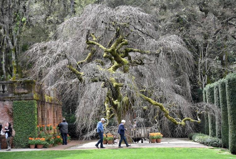 Filoli Gardens 3
