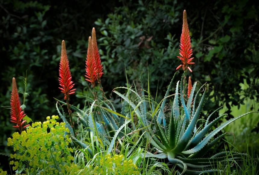 Stanford Cactus Garden 2