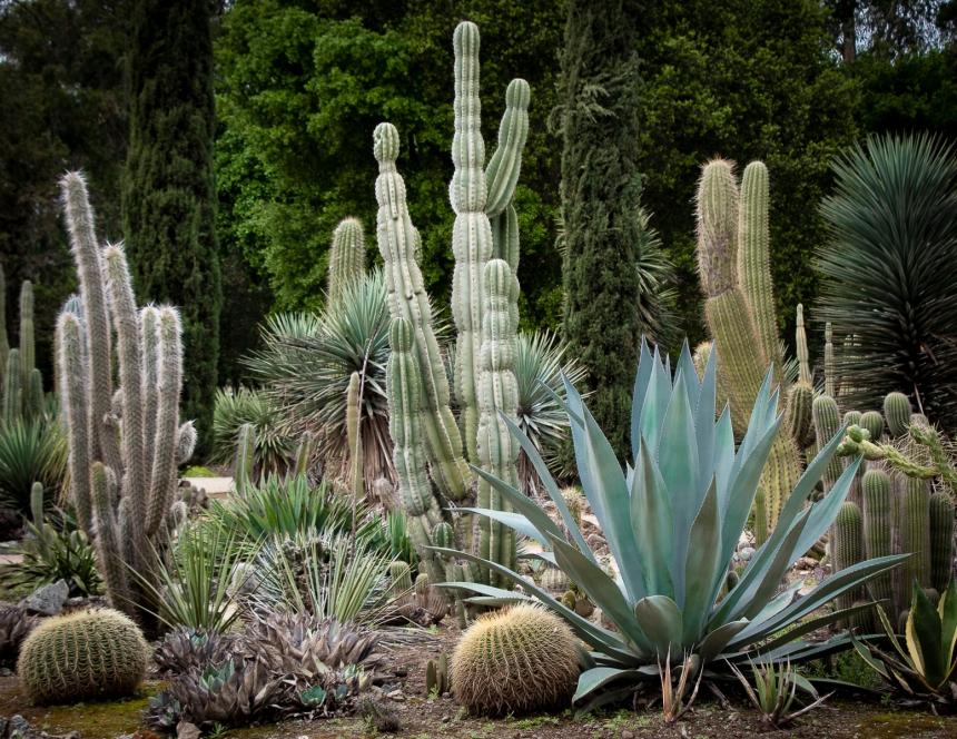 Stanford Cactus Garden LR4